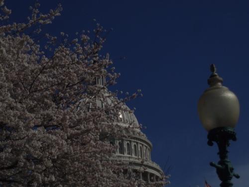 Spring in D.C.